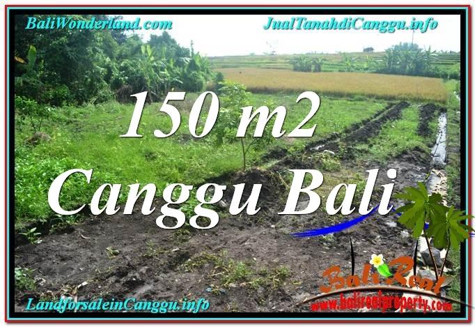 TANAH MURAH di CANGGU BALI DIJUAL 150 m2 di Canggu Pererenan