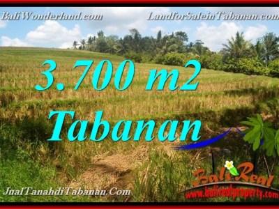 TANAH di TABANAN DIJUAL MURAH 3,700 m2 di Tabanan Selemadeg