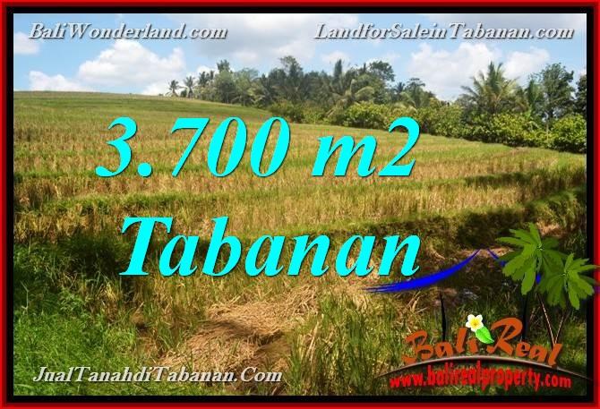 TANAH MURAH DIJUAL di TABANAN 37 Are di Tabanan Selemadeg