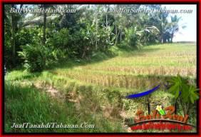 TANAH MURAH DIJUAL di TABANAN BALI 3,700 m2 di Tabanan Selemadeg