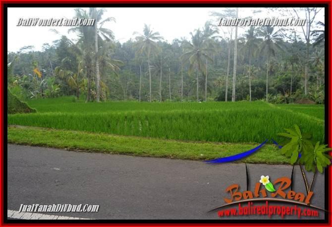 Tanah Murah  di Ubud Bali Dijual 10,000 m2  View Sungai dan Tebing