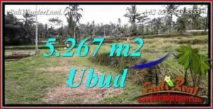 JUAL Tanah di Ubud 53 Are View sawah