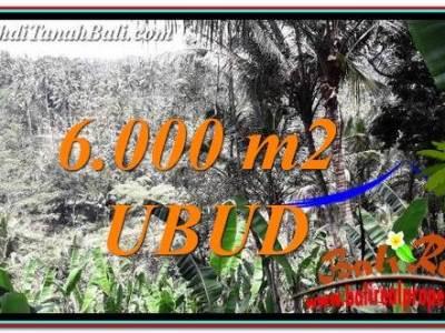JUAL TANAH di UBUD 6,000 m2 di Ubud Payangan