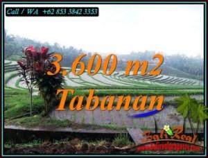 TANAH di TABANAN JUAL MURAH 36 Are VIEW SAWAH