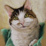 portrait form a clients photo of a white faced cat with spot on nose wrapped in green blanket