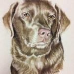 pastel pet portrait of light brown chocolate lab