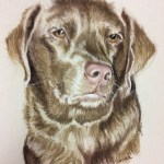 pastel pet portrait of light brown chocolate lab