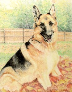 colored pencil drawing of german shepherd dog sitting in leaves with wood fence in background
