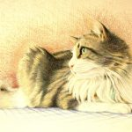 pet portrait of Norwegian Forest cat on a blue and white tablecloth in colored pencil