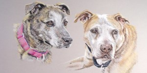 pastel portrait of two pit bulls