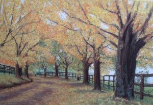autumn landscape of tree lined road with wooden fences