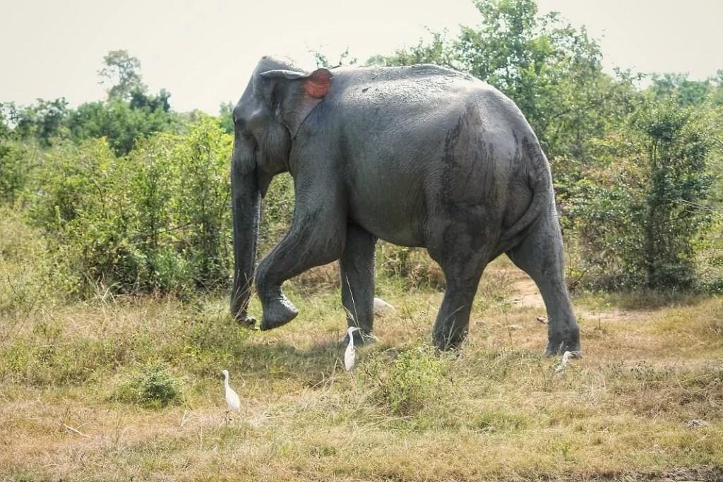 Sri-Lanka by Train - Uwadalawe Park