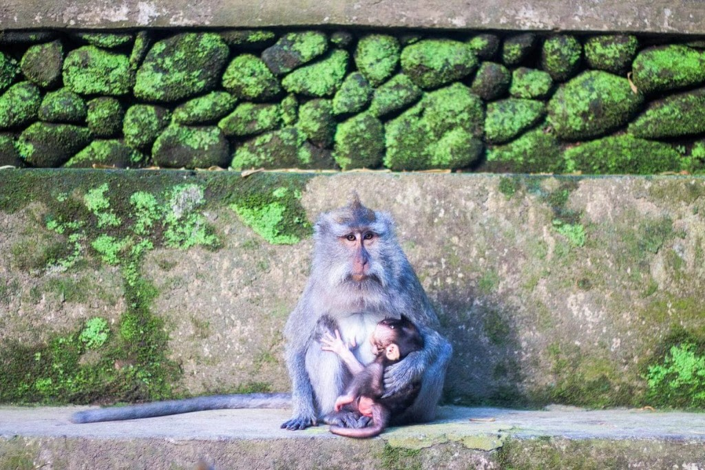 Best things to do in Ubud, Bali - Monkey Forest