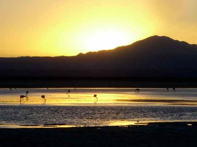 dramaic-sunset-flamingo.jpg