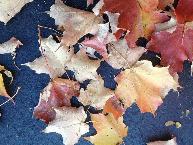 "fall leaves nature ""lynn friedman"" ""tango diva"""