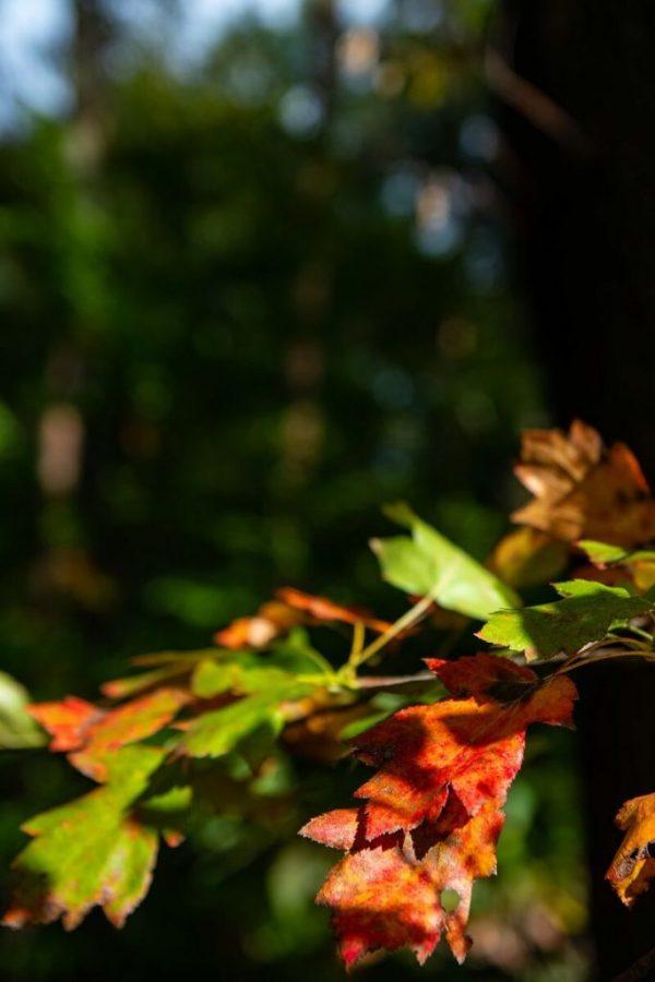 Fotografieren im Herbst - Buntes Herbstlaub