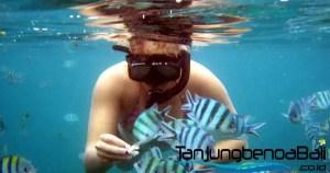 Snorkeling Tanjung Benoa