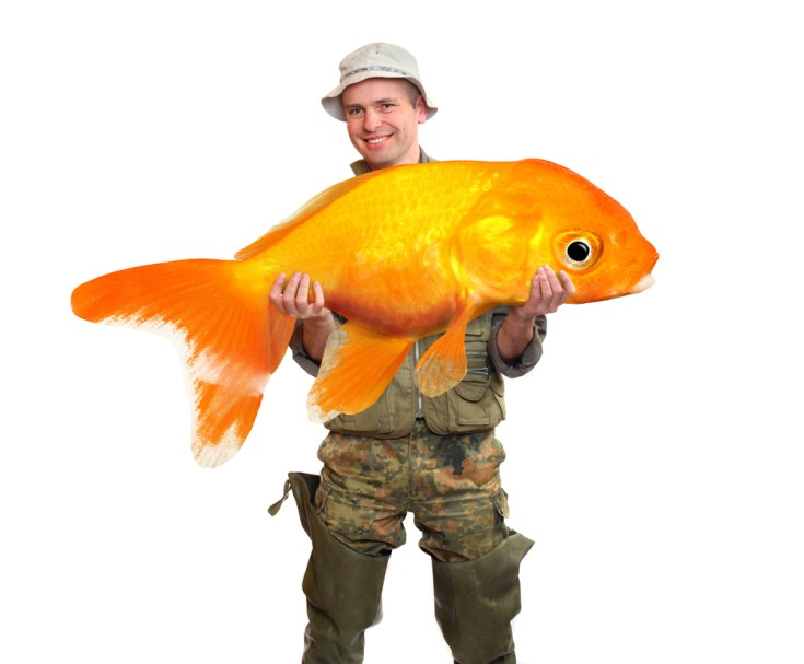 Fisherman holding a big goldfish in a white background.