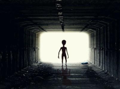 Dulce, una base per lo studio delle specie aliene