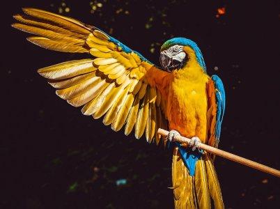 Trilussa: Er pappagallo ermetico