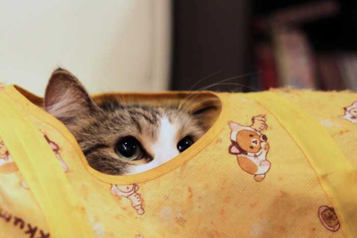 Déluge de chats : le cat-café Nyankoto à Takadanobaba