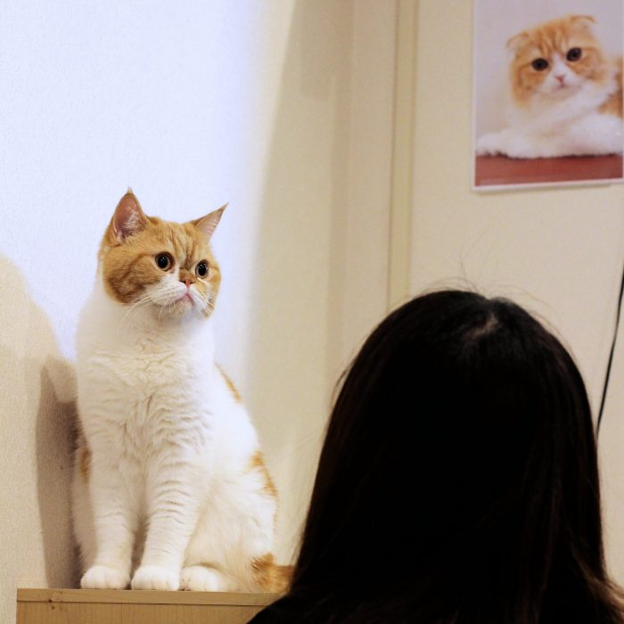 cat-cafe-nyankoto-23