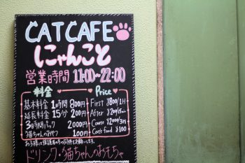 cat-cafe-nyankoto-28