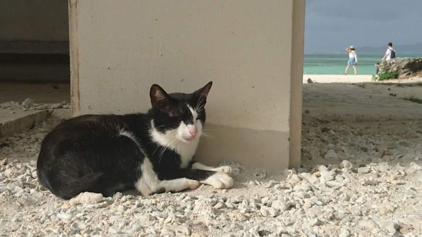 les-chats-de-kondoi-beach-6