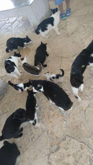 les-chats-de-kondoi-beach-7