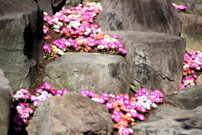 Des fleurs à collectionner, toute l'année!