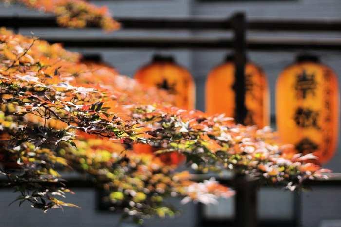 Passage éclair au temple Ichigayakameokahachimangu (à vos souhaits)