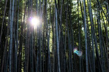 2017-10-27 Arashiyama Kyoto (8)