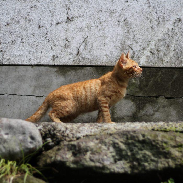 Tu veux voir ma collection de chats errants ? (vol. 2)