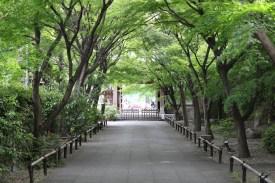 De Takadanobaba à Koenji à vélo (17)