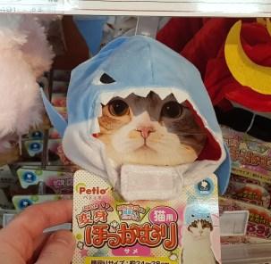 Bonnet de requin pour chat