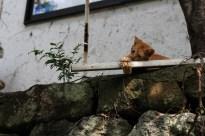 Kurokawa Onsen Cats 21 juillet 2017 (4)