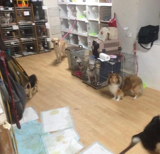 ペットホテルが動物虐待?元従業員が店のブログをハッキングして暴露!