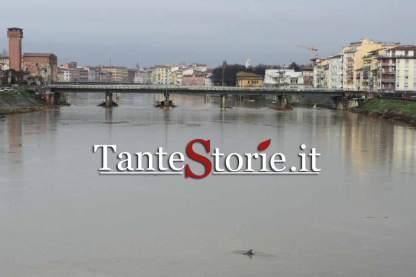 Il delfino e la città di Pisa