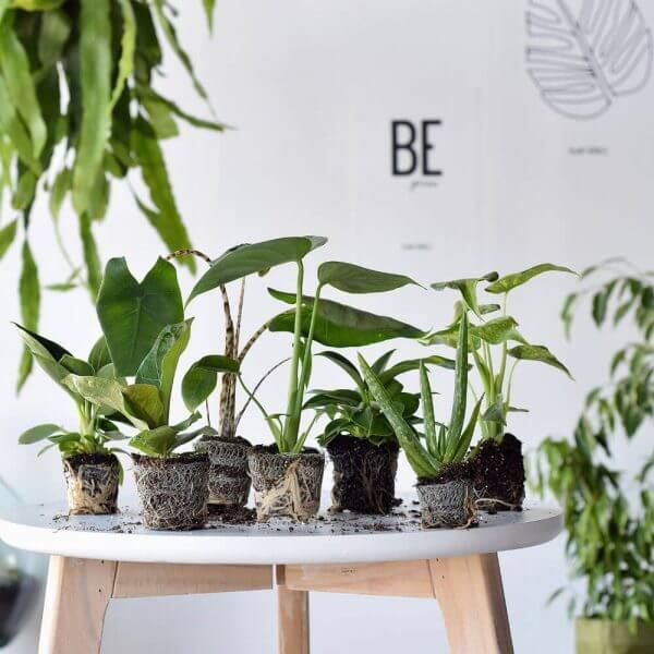 stekjes plant rebelz