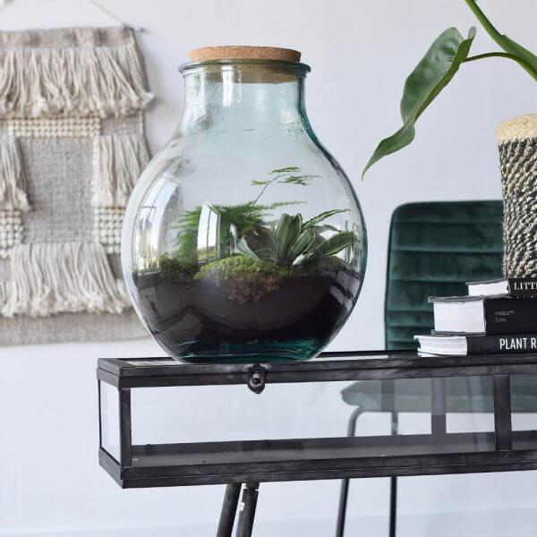 terrarium plant rebelz