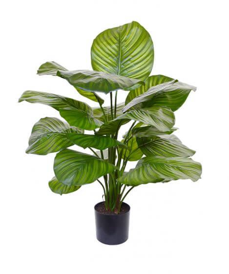 kunstplanten calatea fasciata