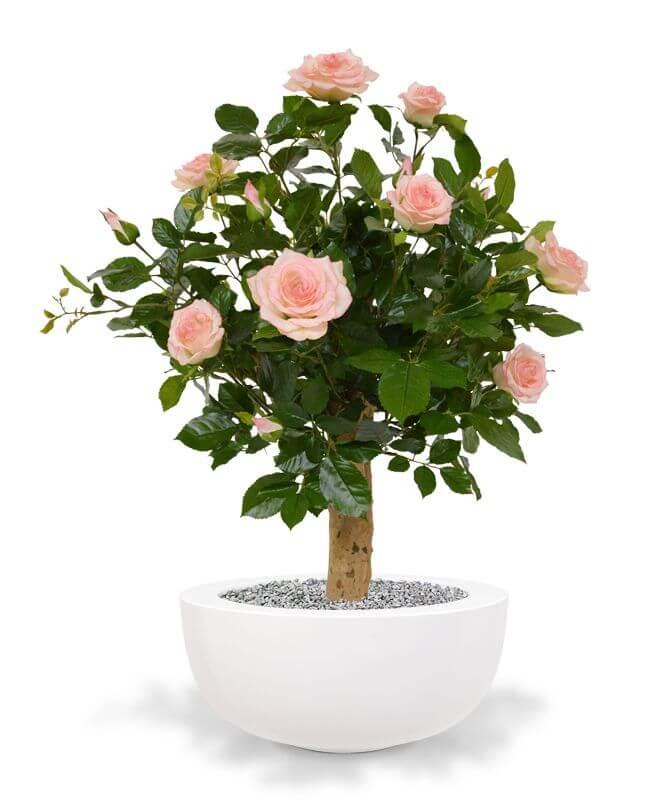 kunstplanten roos op stam