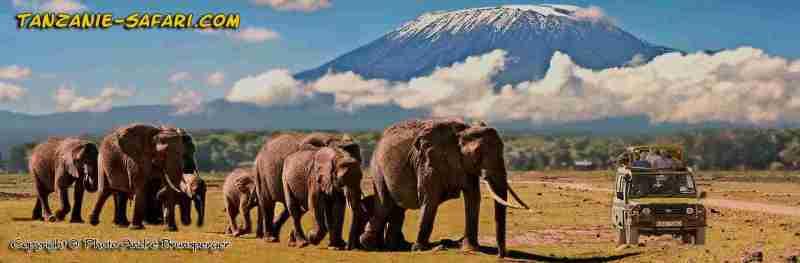 Safari Tanzanie. Eléphants devant le mont Kilimandjaro le soir Tanzanie