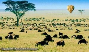 Safari tanzanie voyage Zanzibar.. Grande migration des Gnous et des Zèbres dans le Serengeti en Tanzanie