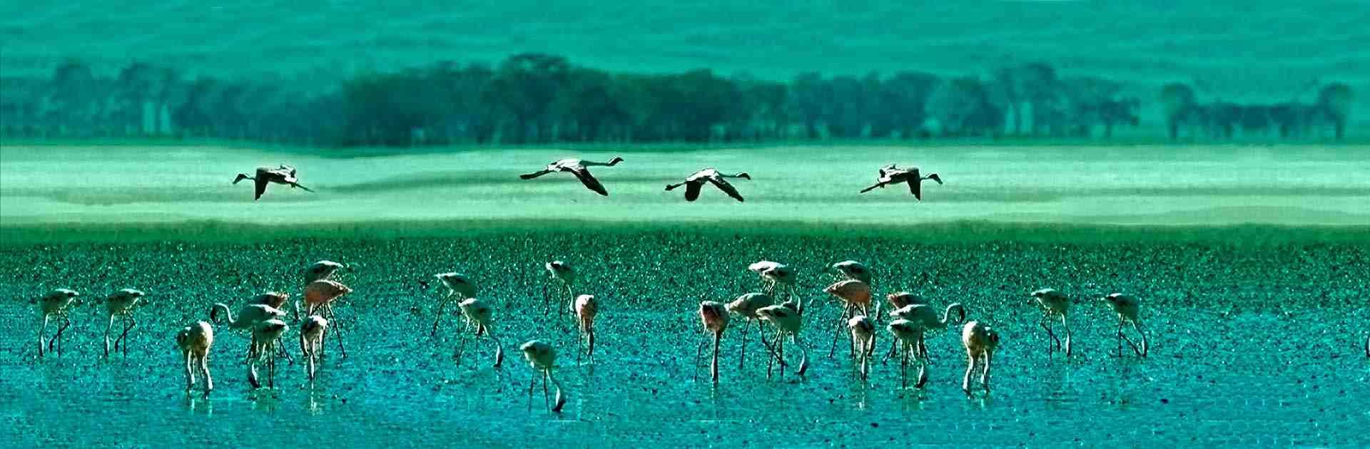 Circuit safari pas cher Cratère du N'Gorongoro Tanzanie