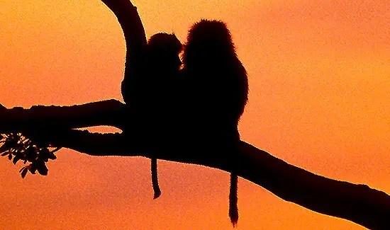 voyage de noces safari karibuni chui