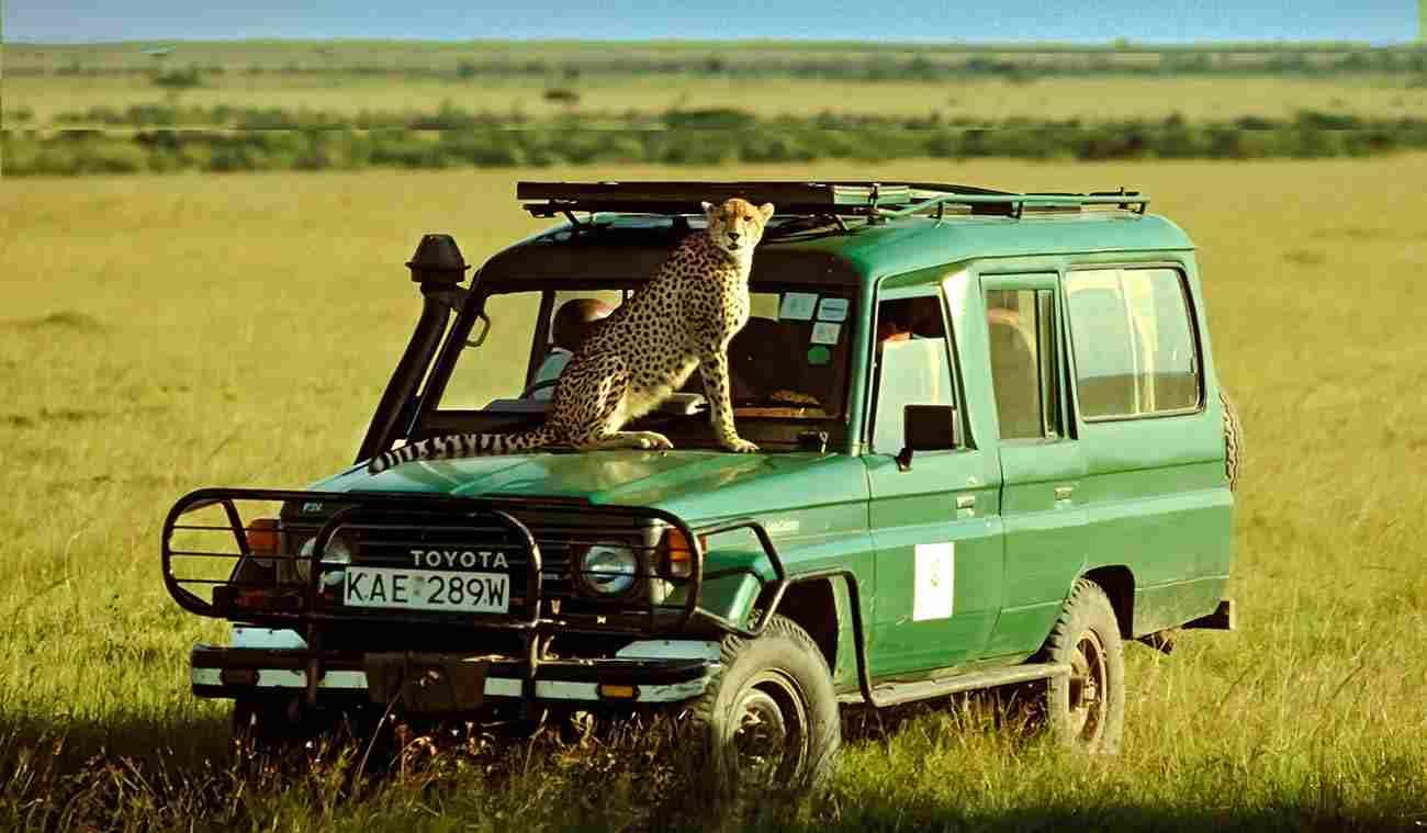 Guépard sur un véhicule 4x4. Un safari en routard est-il possible ?