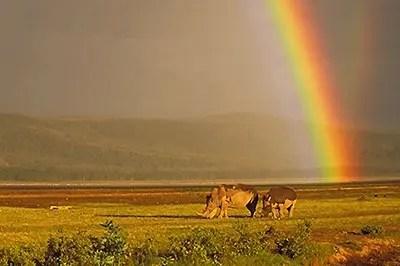 Meilleure saison Tanzanie