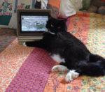 image Maggie cat