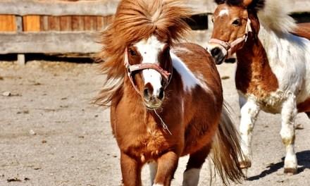 Das Leben ist kein Ponyhof – machen wir es dazu!